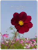 苗栗縣.大湖鄉.草莓文化館 (大湖酒莊):[esther1793] 1408769006.jpg