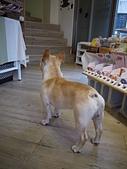 台南市.東區.Doggie Doggie:[lotuschichi] P1060793.JPG