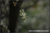 台北市.士林區.志成公園:[moon1230] 志成公園