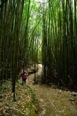 新竹縣.尖石鄉.司馬庫斯巨木步道:[lsg2006] 司馬庫斯巨木步道