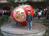 苗栗縣.大湖鄉.草莓文化館 (大湖酒莊):[fuli19610302] 採梅記 (7).jpg
