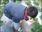苗栗縣.大湖鄉.草莓文化館 (大湖酒莊):[fuli19610302] 採梅記 (14).jpg
