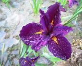 (這是一本待審核的相簿):[hsu.demi] 紫20.jpg