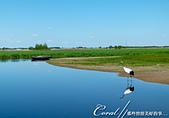 黑龍江省.黑龍江扎龍國家級自然保護區:[coral4401] 黑龍江扎龍國家級自然保護區