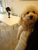 台北市.大安區.Zoo Cafe 動物園野餐咖啡:[lotuschichi] P1100596.JPG