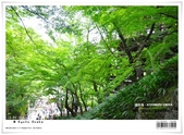 京都府.清水寺:[bibitsai] nEO_IMG_20120623td 870.jpg
