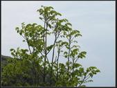 新北市.瑞芳區.小粗坑聚落:[fuli19610302] 小粗坑 (19).jpg