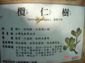 高雄市.左營區.高雄左營三角公園:[liupangyen] 097年01月21日南左營三角公園_38.JPG