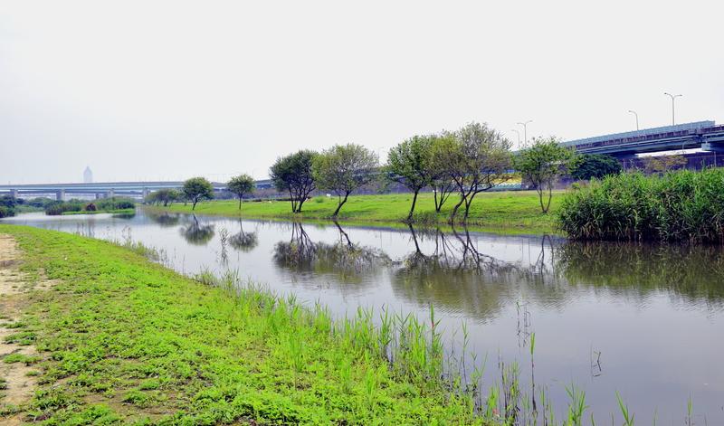 新北市.板橋區.華江人工濕地:[lsg2006] 華江人工濕地