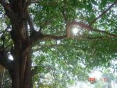 高雄市.左營區.高雄左營三角公園:[liupangyen] 097年01月21日南左營三角公園_53.JPG