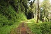 嘉義縣.阿里山鄉.阿里山水山線步道:[inmytravel] 阿里山水山線步道