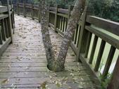 台北市.內湖區.大崙湖環湖步道:[anny1958] 大崙湖環湖步道