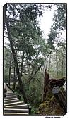 宜蘭縣.大同鄉.太平山森林遊樂區:[stanley_usc] DSC00737.jpg