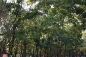 高雄市.楠梓區.高雄都會公園:[liupangyen] 100年02月06日與妻子由高雄都會公園參加自然生態導覽活動_27.JPG