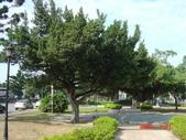 高雄市.左營區.高雄左營三角公園:[liupangyen] 097年01月21日南左營三角公園_03.JPG