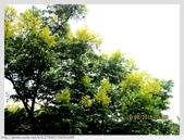 新北市.樹林區.新北市大漢溪自行車道-樹林段:[k5637849] 新北市大漢溪自行車道-樹林段