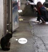 新北市.瑞芳區.猴硐車站 (猴硐貓村):[chihho32] 這邊的貓很會注意我們在幹麻