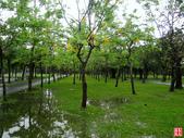 台北市.大安區.大安森林公園:[yuhyng] 大安森林公園隨逛 (4).jpg