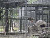 花蓮縣.鳳林鎮.新光兆豐休閒農場:[lion.love]  DSC02606.JPG