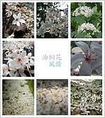 (這是一本待審核的相簿):[bluedragon88] 油桐風情.jpg