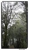 宜蘭縣.大同鄉.太平山森林遊樂區:[stanley_usc] DSC00764.jpg