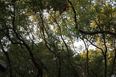 高雄市.楠梓區.高雄都會公園:[liupangyen] 100年02月06日與妻子由高雄都會公園參加自然生態導覽活動_34.JPG