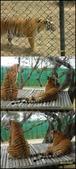 新竹縣.關西鎮.六福村主題遊樂園:[joanna_2012] 220089002_m.jpg