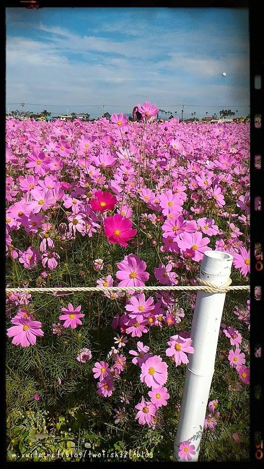 台中市.新社區.2015新社花海暨國際花毯節~12/6:[twofish321] 2015新社花海 ~12/6