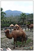 年初一(又見動物園)>,>:20110203074.jpg