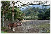年初一(又見動物園)>,>:20110203082.jpg