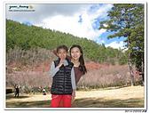 2014_0202_武陵2日:IMG_0772.jpg