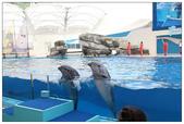 2011海洋公園-海豚秀:IMG_28522011.jpg