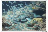 20150523沖繩之旅~辛苦多年捨得ㄧ下吧!(風景篇):0529_yuan_0199.JPG