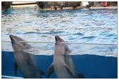 2011海洋公園-海豚秀:IMG_28532011.jpg