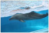 2011海洋公園-海豚秀:IMG_28542011.jpg