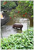 年初一(又見動物園)>,>:20110203095.jpg