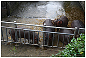 年初一(又見動物園)>,>:20110203098.jpg