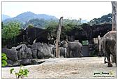 年初一(又見動物園)>,>:20110203102.jpg