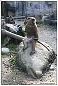 年初一(又見動物園)>,>:20110203114.jpg