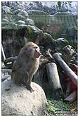 年初一(又見動物園)>,>:20110203115.jpg
