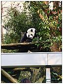 年初一(又見動物園)>,>:20110203132.jpg