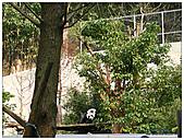 年初一(又見動物園)>,>:20110203133.jpg