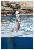 2011海洋公園-海豚秀:IMG_28782011.jpg