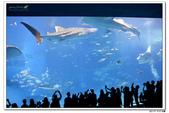 20150523沖繩之旅~辛苦多年捨得ㄧ下吧!(風景篇):0529_yuan_0248.JPG