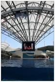 2011海洋公園-海豚秀:IMG_28302011.jpg